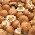 236 | O Aroma de Cogumelo nos Vinhos