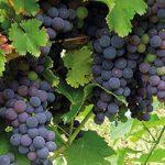 Degustação de vinhos espanhóis