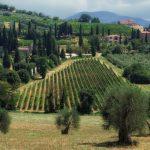 Vinhos da Toscana e uma surpresa!