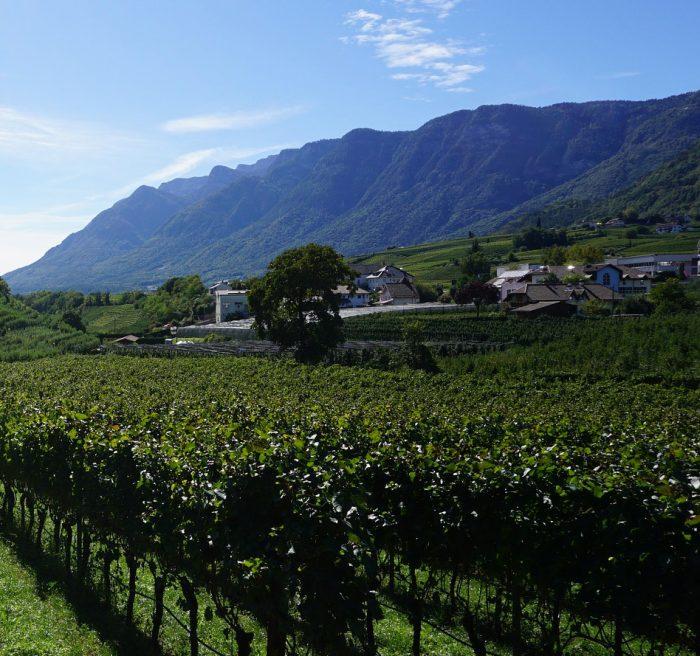 Formação de Sommelier e Profissionais do Vinho-Ciclo II-NOITE