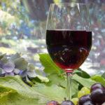 O Vinho e sua Degustação - Barra
