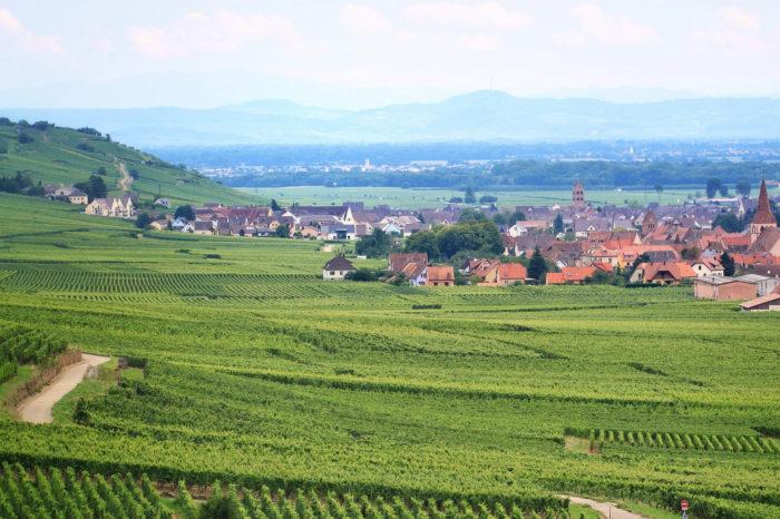 Formação de Sommelier e Profissionais do Vinho-Ciclo II-TARDE
