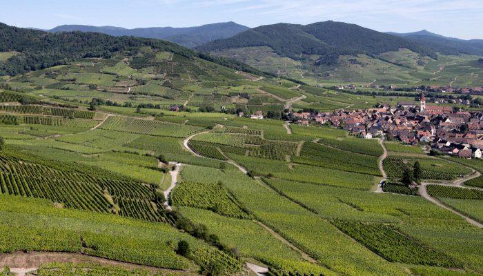 Vinhos da Alsácia, o reflexo de duas culturas - ONLINE