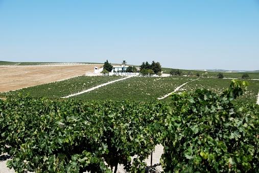 Jerez, os mistérios de um vinho nobre e generoso