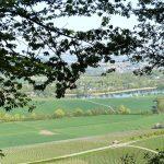 Vinhos da Ilha da Madeira e suas harmonizações