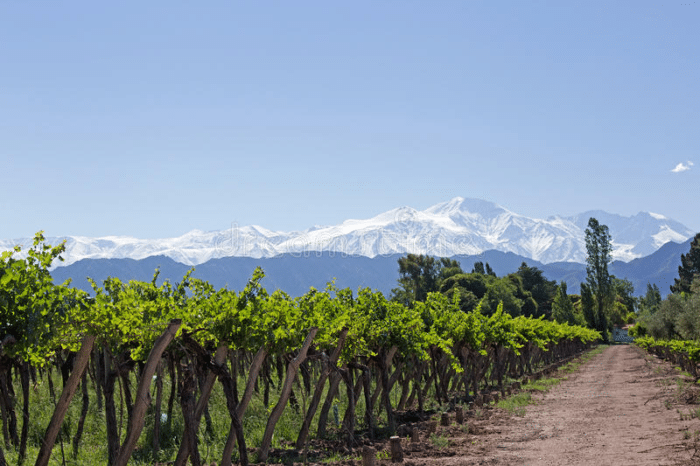 Mendoza, a capital argentina do vinho