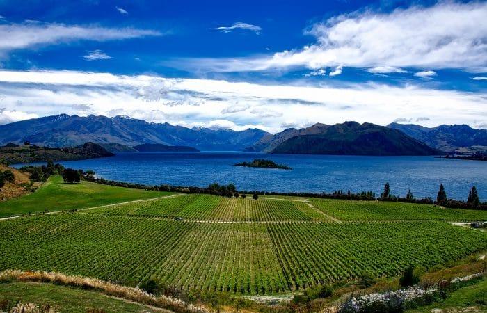 Vinhos de alta gama da Nova Zelândia